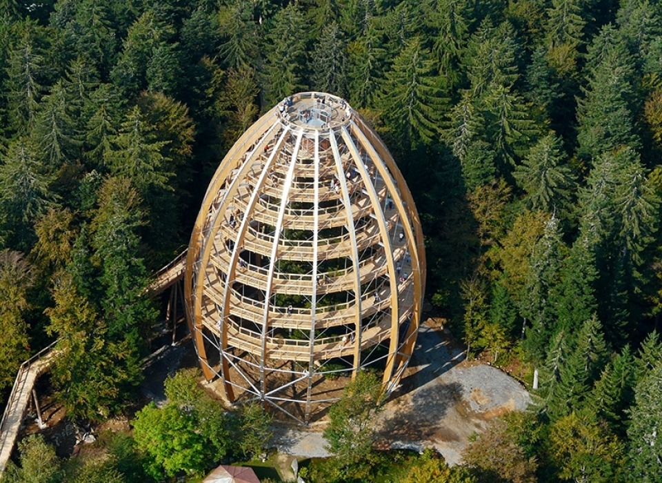 Дорожка в деравах - Баварский лес